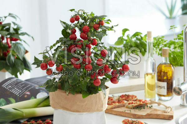 Solanum lycopersicum Pillar Tomatoes™ F1 Catch Red