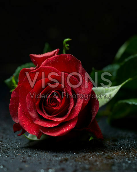 Rosa red