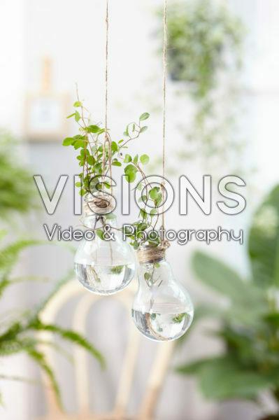 Kamerplanten in gloeilamp