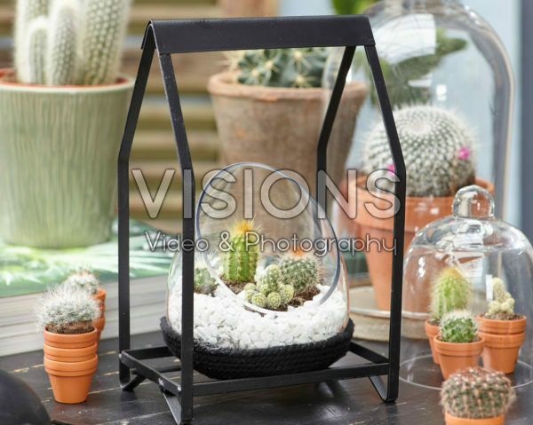 Cactus combination in glass