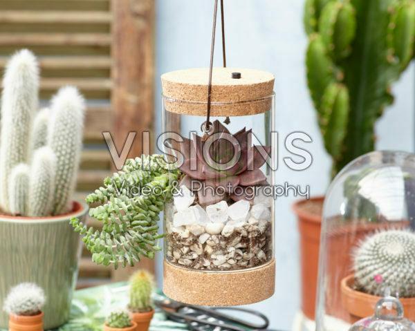 Vetplantjes in glas