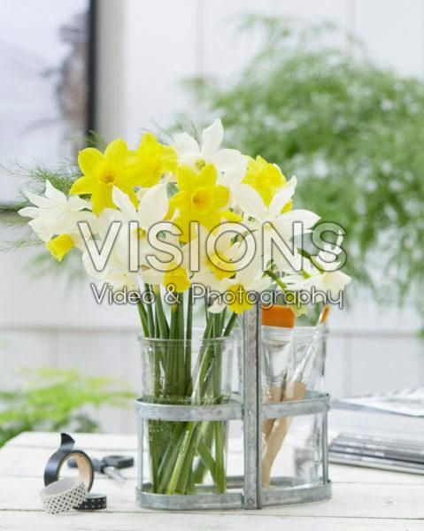 Narcissus combination