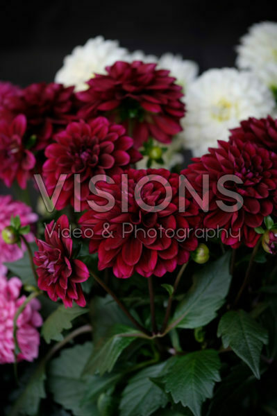 Dahlia LaBella ® Grande red