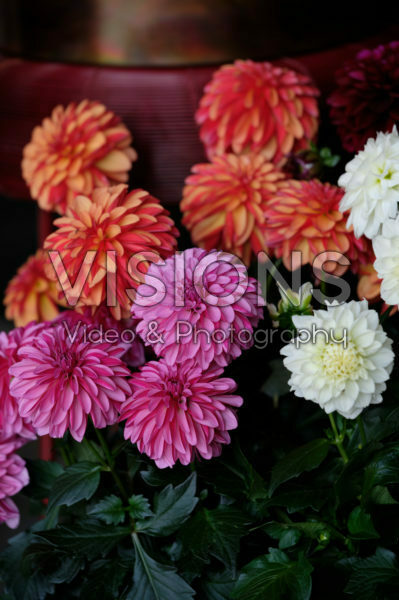 Dahlia LaBella ® Grande mixed