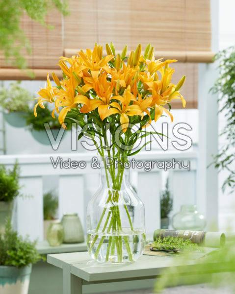 Lilium Twinlife Orange
