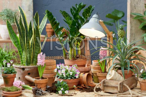 Indoor terracotta collectie