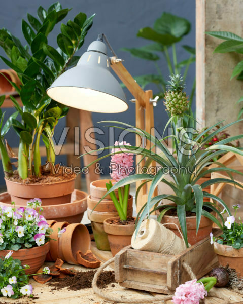 Indoor terracotta collection