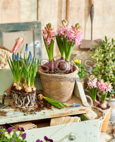 Lente potten planten