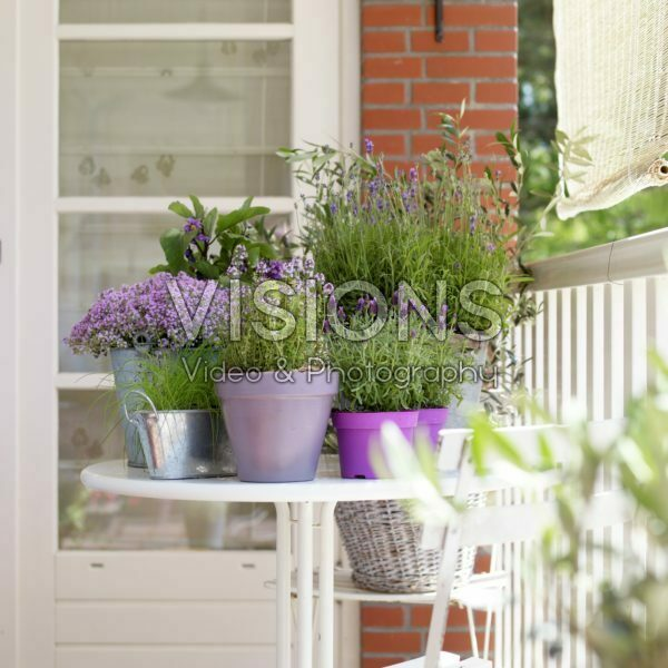 Herb collection on balcony