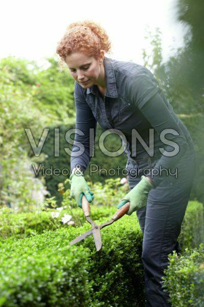 Woman cutting buxus hedge