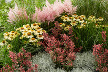 PERENNIAL COMBINATIONS